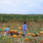 Learn Spanish with Pictures - A Pumpkin Patch